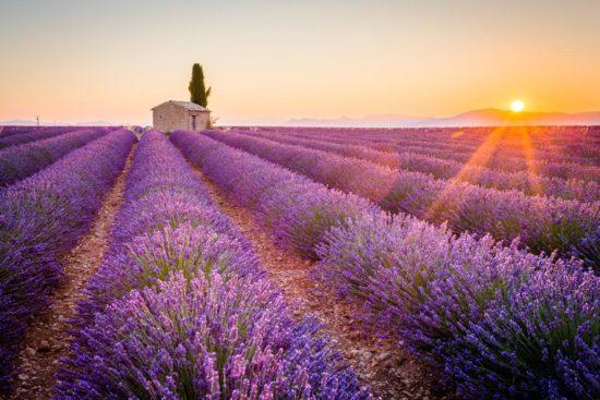 Leuchtende Farben der Provence